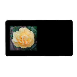 Yellow Rose, on black background. Shipping Label