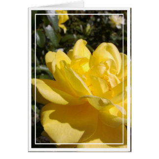 Yellow Rose Photo on Blank Card