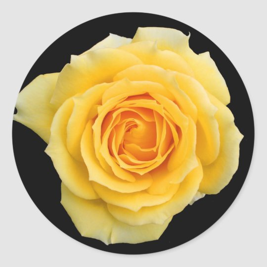 Yellow rose , stickers