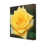 Yellow Rose Stretched Canvas Print