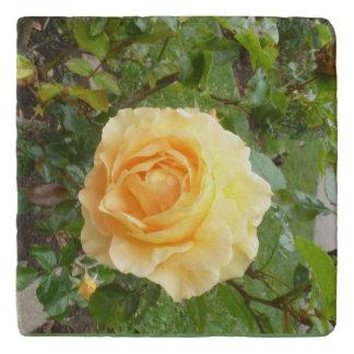 Yellow Rose Trivet