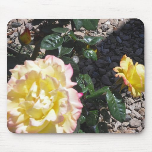 Yellow Rose w Pink Trim Mousepad