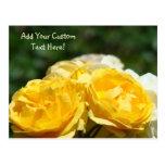 Yellow Roses Custom Post Cards Rose Gardens