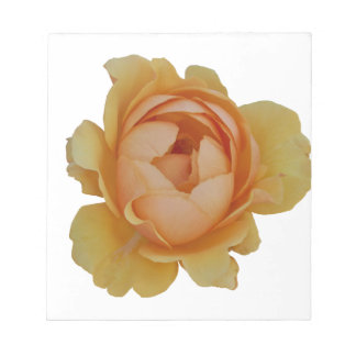 yellow roses in the garden notepad