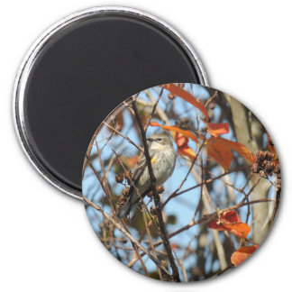 Yellow-rumped Warble in Winter 2 Inch Round Magnet