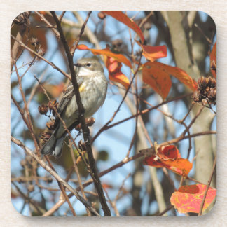 Yellow-rumped Warble in Winter Coaster