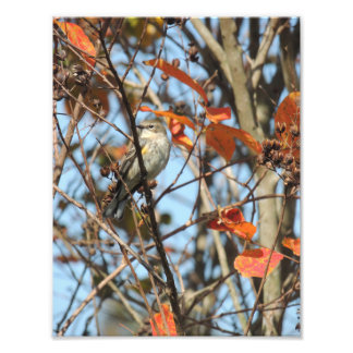 Yellow-Rumped Warble in Winter Photo Print