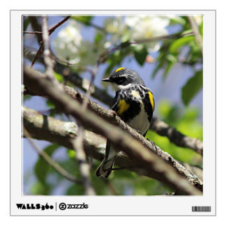 Yellow-rumped warbler in spring plumage wall decal