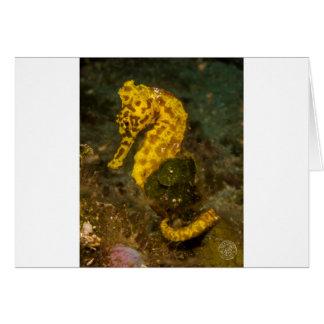 Yellow Seahorse Card