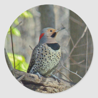 Yellow-Shafted Flicker Coordinating Items Round Sticker