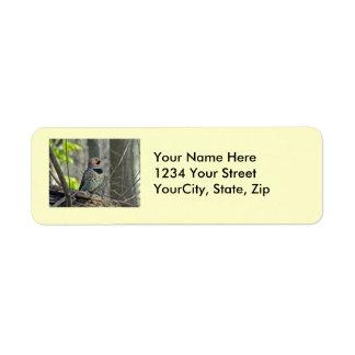Yellow-Shafted Flicker Woodpecker Items Return Address Label