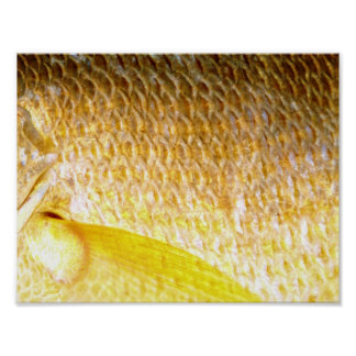 Yellow snapper scales   poster