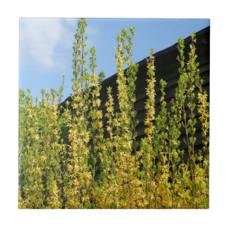 yellow spring blossom and old wood wall ceramic tiles