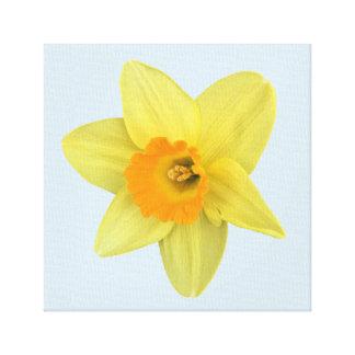 Yellow Spring Daffodil Canvas Print