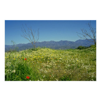 yellow Spring field in the mountains of Cyprus flo Poster