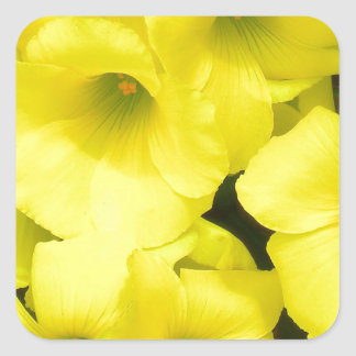 Yellow spring flowers in the garden square sticker