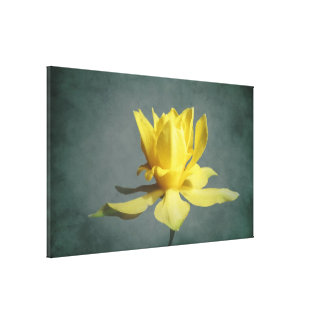 Yellow Spring Narcissus Canvas Print