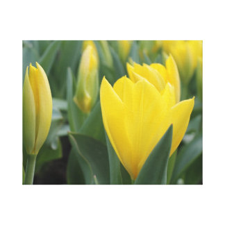 Yellow Spring Tulip Canvas Wall Art