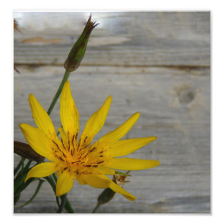 Yellow Star Flower Photo Print