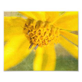 Yellow Straw Flower Distressed Print Art Photo