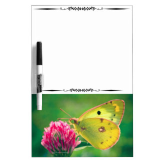 Yellow Sulpher Butterfly Decorative DryEraseBoard