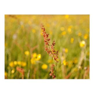 Yellow summer meadow postcard