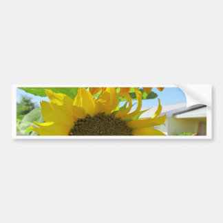 yellow sunflower and red sunflower bumper stickers