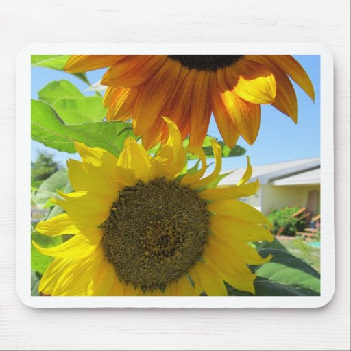 yellow sunflower and red sunflower mouse pads