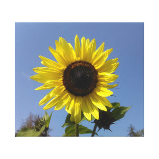 Yellow Sunflower And The Blue Sky Canvas Print
