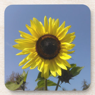 Yellow Sunflower And The Blue Sky Coaster