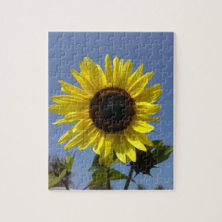 Yellow Sunflower And The Blue Sky Jigsaw Puzzle