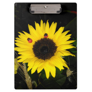 Yellow Sunflower And Two Ladybugs Clipboard