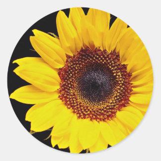 Yellow sunflower  flowers classic round sticker