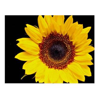Yellow sunflower  flowers postcard