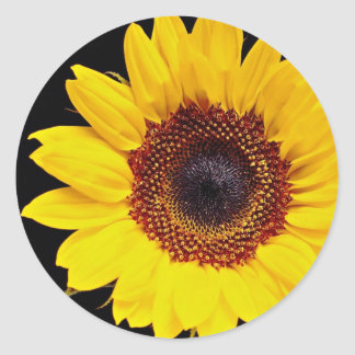 Yellow sunflower  flowers stickers