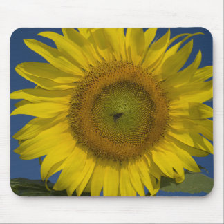 Yellow Sunflower Mouse Pad