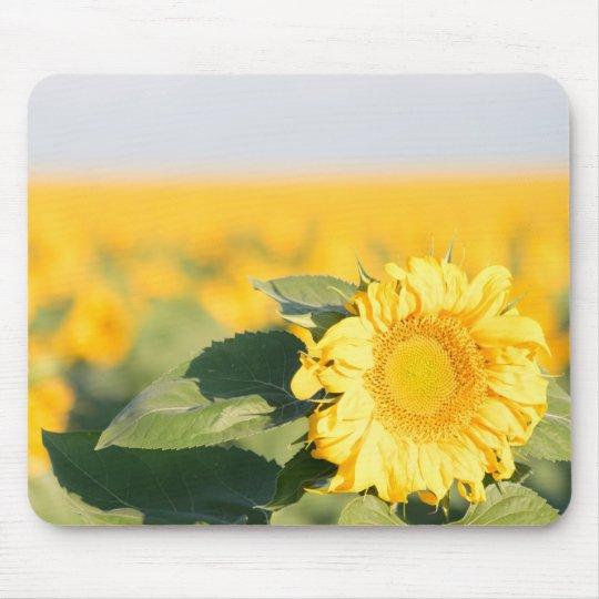 Yellow Sunflower Mousepad