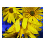 Yellow Sunflowers, Blue Bee Poster