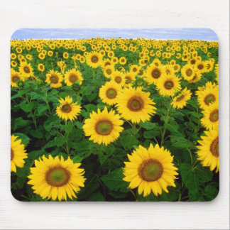 Yellow Sunflowers Mousepad