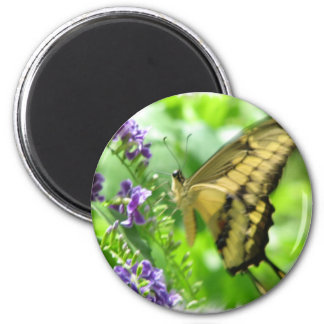 Yellow Swallowtail Butterfly  Circular Magnet