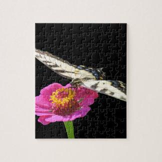 Yellow Swallowtail Puzzles