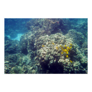 Yellow Tang Underwater Poster Print