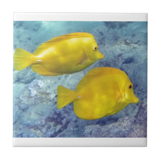Yellow Tangs Tile