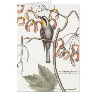 Yellow Throated Warbler / Seligmann - Catesby Card
