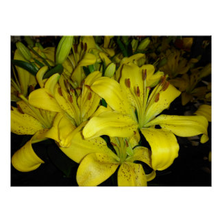 Yellow Tiger Lilies Poster