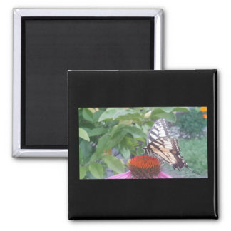 Yellow Tiger Swallowtail Butterfly Magnet