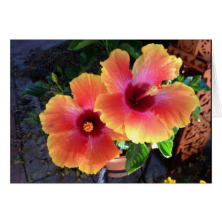 -yellow tip Hibiscus- Card