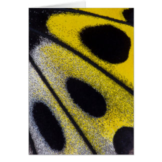 Yellow tropical butterfly close-up card
