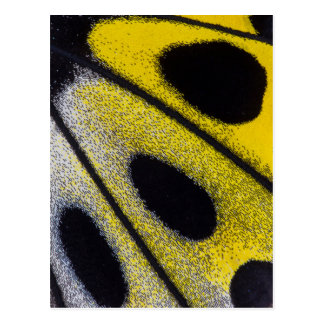 Yellow tropical butterfly close-up postcard