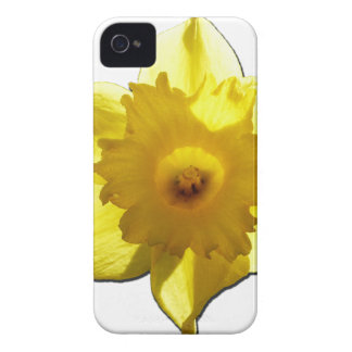 Yellow Trumpet Daffodil 1.0 iPhone 4 Case-Mate Cases
